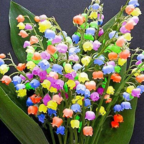 Kisshes Seeds- 100 unids semillas de flores de orquídeas de Bell Convallaria semillas Bonsai flores semillas jardín (100 Pcs): Amazon.es: Jardín