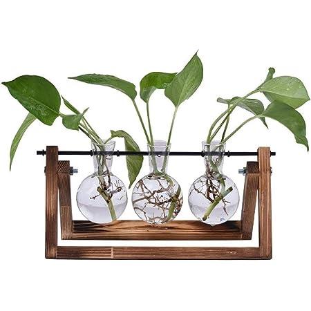 2pcs Desktop Glass Planter Bulb Vase w// Solid Wooden Stand and Metal Holder