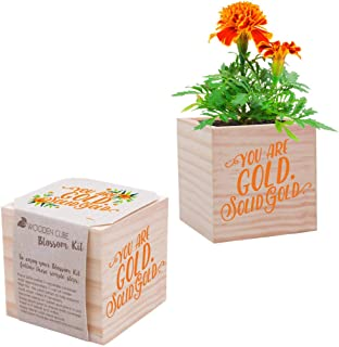 Best plant cube gift Reviews