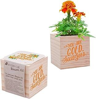 Best marigold flower plant Reviews