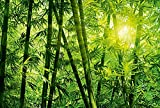 Papel pintado fotográfico bambú bosque | bambú natural, bienestar | 3,84 m x 2,6 m | verde