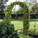 RAM ONLINE 5060459948266 Ram Grande de Metal Negro de 2,4 m para Rosas, Plantas trepadoras, Soporte de Arco, decoración de jardín