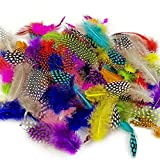 Best Feathers - JPSOR 120pcs 3-6 Inches Colorful Spotted Feathers Review