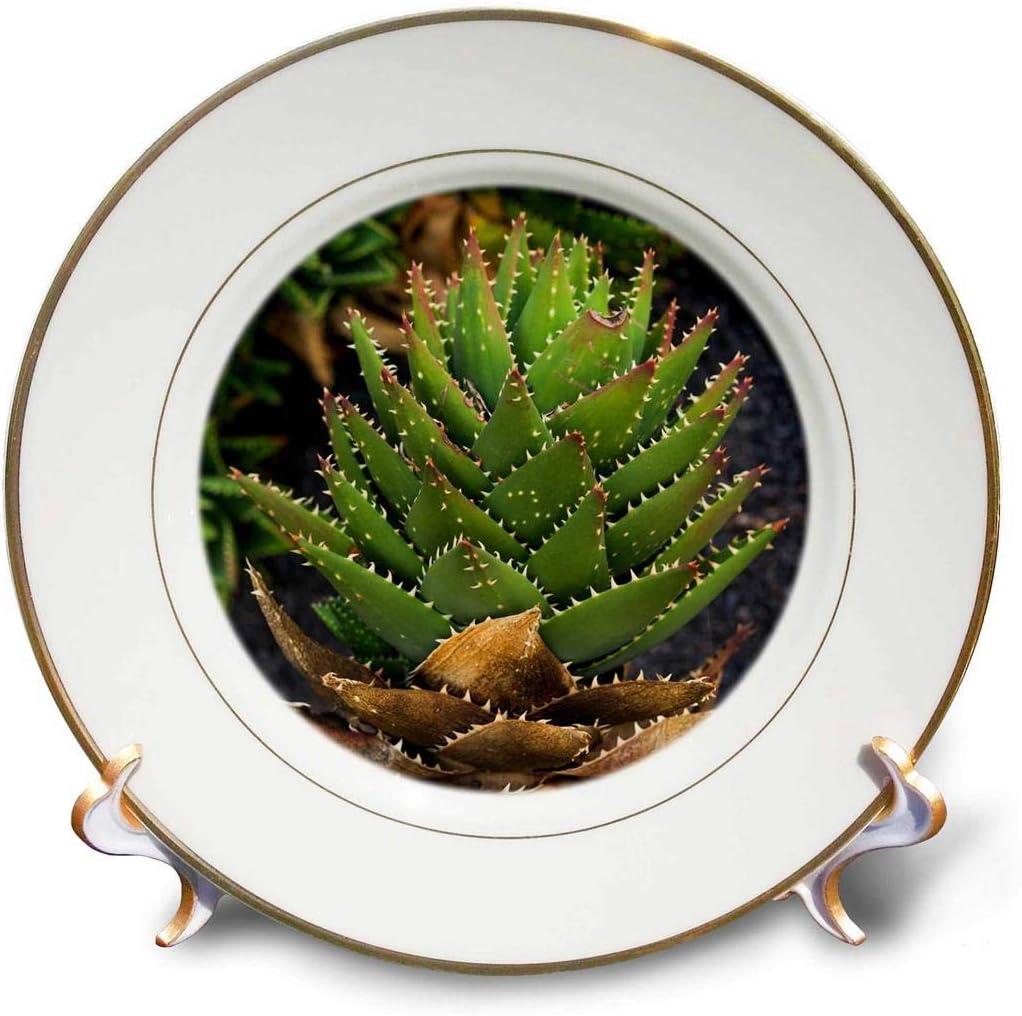 5 popular 3dRose Spain Canary Ranking TOP20 Islands Lanzarote Spiky Guatiza Cactus P