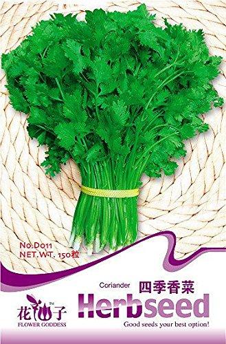 Graines de légumes artichaut Graines 4 artichaut de graines de riche en Anthocyanes Abat-jour Family Pack d'un Lot d'environ 20, Green, As Show in Description