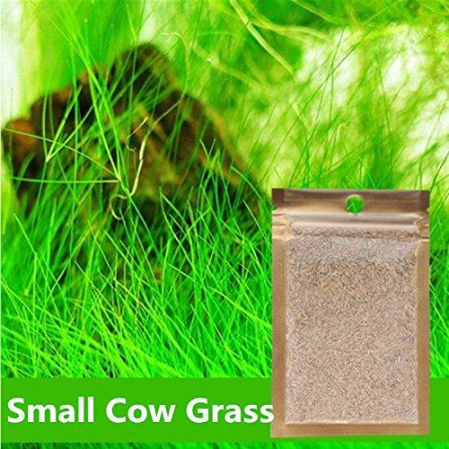 Best Aquarium Grass