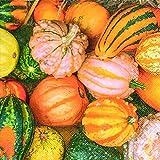 Home Collection Casa Cucina Decorazione Accessori Set 40 Tovaglioli Monouso Carta 3 veli 33 x 33 cm Motivo Composizione Colorata di Zucche