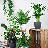 mix air so pure | set di 5 piante depurative con elho pots | edera, spathiphyllum, nephrolepis, calathea, dypsis | altezza 40-80 cm | vasi Ø 18-20 cm inclusi