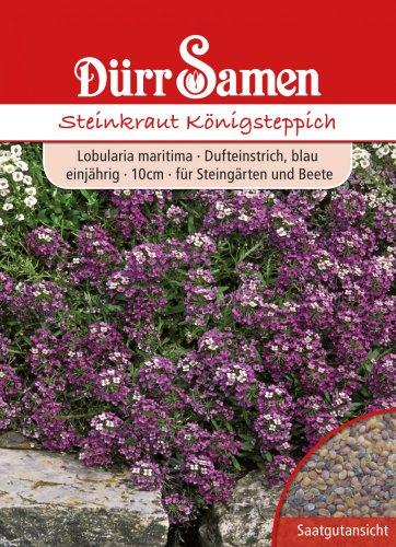 Dürr-Samen Steinkraut Königsteppich
