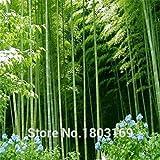 envío libre 200pcs de semillas de bambú gigantes...