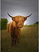 Wee Blue Coo Photo Farm Livestock Animal Highland Cow Calf Scotland Art Print Poster Wall Decor 12X16 Inch