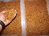 BASSETT'S CRICKET RANCH 1100 Count Live Mealworms Organically Grown