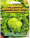 Salade de tête Batavia blonde de Paris