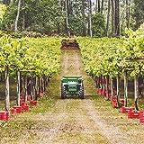 Smartbox - Caja Regalo - Bodega Paco & Lola: Visita y cata de 3 vinos en Pontevedra - Ideas Regalos Originales
