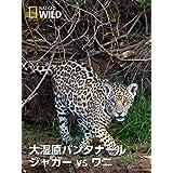 大湿原パンタナール:ジャガー vs ワニ
