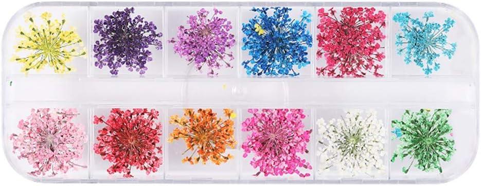 Sdoveb 1Box Small Max Very popular 86% OFF Dry Flower Sunflower Star Daffodi Sticker Nail