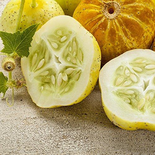 Citron Graines de concombre - Cucumis Sativus