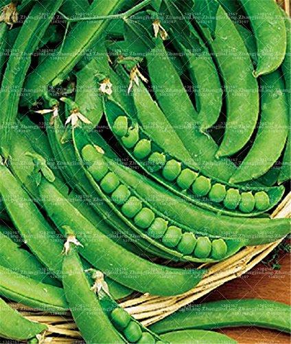 Acheter 20 pcs/sac Graines de pois ~ graines de haricots étonnants Green Arrow douce bio ~ issu de culture biologique. fruits légumes graines