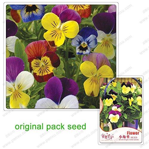 35 graines/Pack, fleurs Pansy, graines alto cornutat, graines de fleurs balcon jardin bonsaïs petit angle Viola en pot
