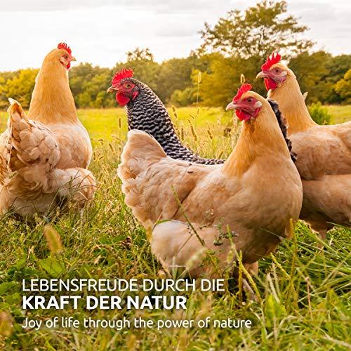 AniForte Hühnertraum Gesunde Belohnung 2,5 kg – Naturprodukt für Hühner - 5
