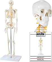 Axis Scientific Mini Human Skeleton Model with Metal Stand - 31 Inches Tall with Removable Arms and Legs, Easy to Assemble, Includes Detailed Product Manual for Study and Reference, Worry Free 3 Year Warranty
