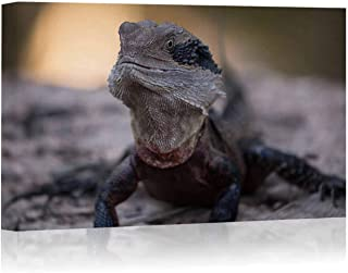 Australian Eastern Water Dragon Basks on The Bank of a Creek Canvas Art Wall Decor,042809 Painting Wall Art Picture Print on Canvas,16