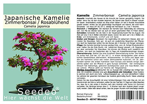 Seedeo® Japanische Kamelie (Camelia Japonica) Zimmer-Bonsai Rosablühend 8 Samen