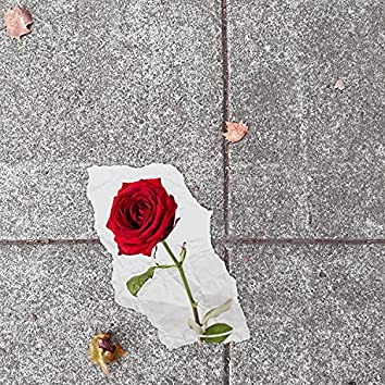 Rose from Concrete