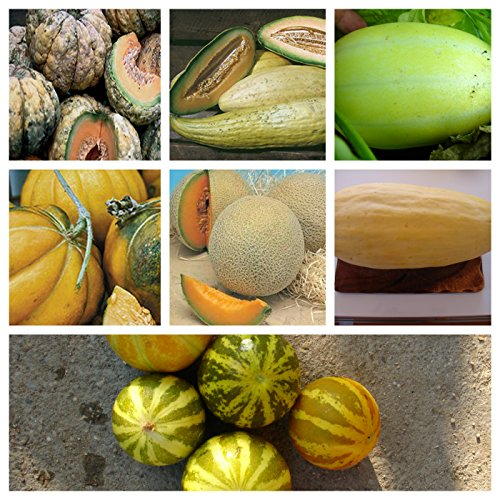 popular melons:8 vartieties, 80 graines, separately packed