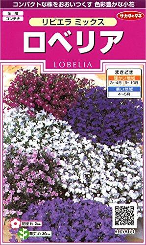 サカタのタネ 実咲花5860 ロベリア リビエラミックス 00905860