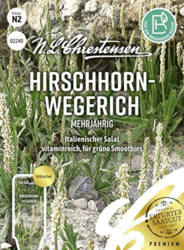 Hirschhornwegerich Mehrjährig, italienischer Salat, Samen