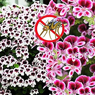 Best planting mosquito plants Reviews