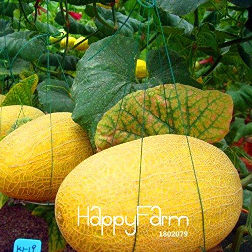 Perte de promotion! Douce Hami melon Graines de fruits Graines Cantaloup Melon Jumbo Heirloom Plantes Succulentes 10 Pcs/Sac, Pt5K5D