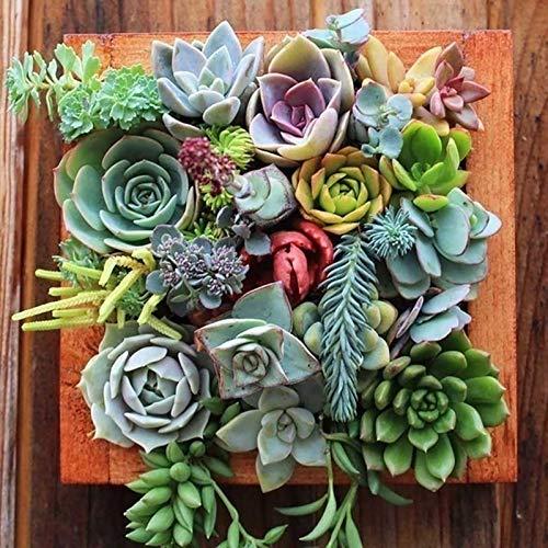 semi 500pcs Mix succulente, 500Pcs Bonsai Seed Eye-catching Seed Aesthetic Color Mix Fresh Pianta grassa per Ideal all'aperto giardinaggio regalo