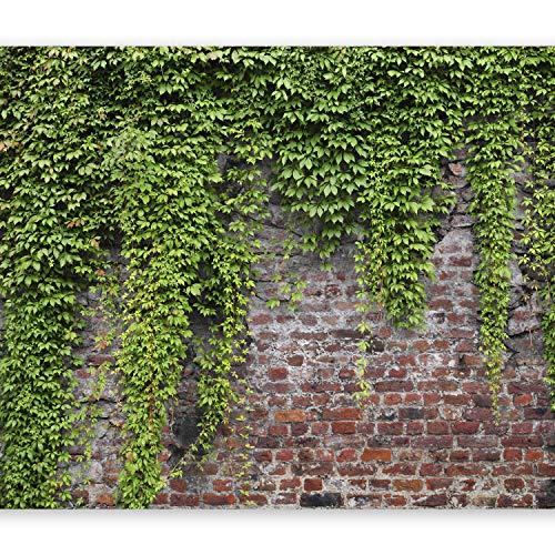 murando Fotomurales Abstracto 400x280 cm XXL Papel pintado tejido no tejido Decoración de Pared decorativos Murales moderna Diseno Fotográfico pared pierdas pared hiedra b-a-0173-a-c