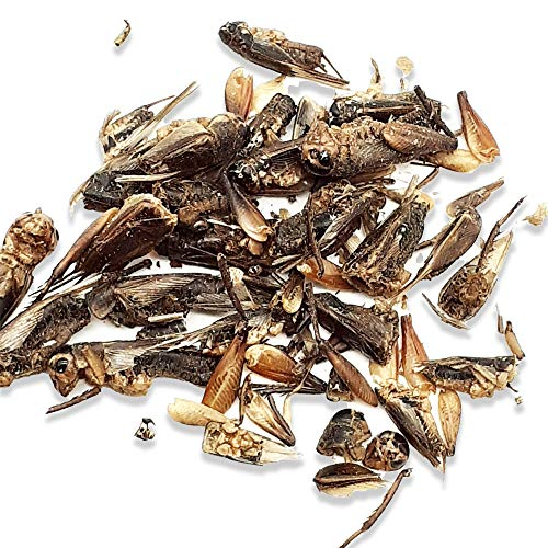 80g Dried Crickets - Perfect for Most Wild Birds – HIGH IN PROTEIN - High Energy Snack Loved by Birds – ATTRACT MORE BIRDS