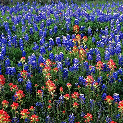 XINDUO Graines de Parfum rares,Graine de Fleur de Jardinage Graines de Fleurs de jardinage-100 Capsules,Mélange Fleurs graines