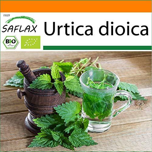 SAFLAX - Set regalo - Ecológico - Ortiga - 2000 semillas - Con caja regalo/envío, etiqueta para envío, tarjeta de felicitación y sustrato de cultivo y fertilizante - Urtica dioica