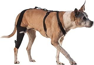 custom acl brace for dogs