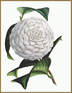 Notebook Camellia: Blank journal. 150 pages, Soft cover, A4+ (21.59 x 27.94 cm) 8,5 x 11 inch