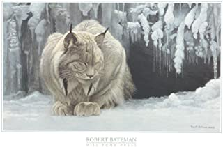 dozing lynx robert bateman print