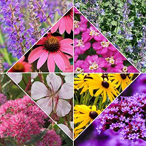 8x Pflanzen für Garten'Desert Flowers'...