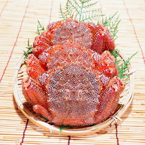かにのマルマサ 北海道産 訳あり 活毛蟹 1kg詰(2〜3尾入) 冷蔵品