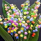 Cioler Seed House - 40 pièces graines de muguet parfumées et colorées parfumées Lily of the Valley graines de fleurs rares vivaces rustiques pour balcon/terrasse de jardin