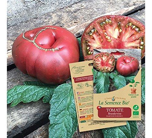 Graines Bio - Tomate Brandywine 20gn - La Semence Bio