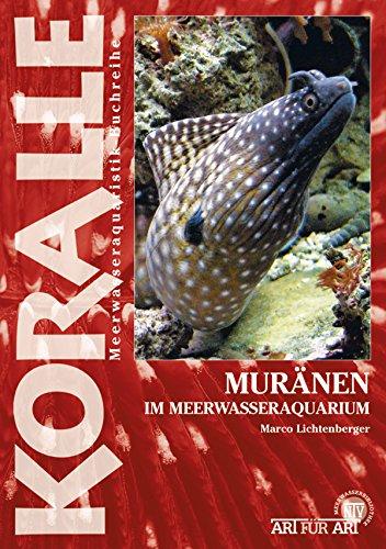 Muränen im Meerwasseraquarium (Art für Art)
