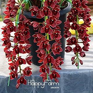 Semillas 150PCS Ranunculus asiaticus de flores para el hogar y jardín Plantas de bricolaje ranúnculo persa semilla de flor Bulbos