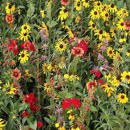 Outsidepride Texas/Oklahoma Wildflower Seed Mix - 1 LB