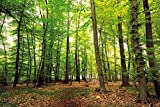 1art1 Wälder - Wald Der Stille XXL Poster 120 x 80 cm