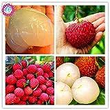 10 pcs / Semillas litchi bolsa gigante semillas de lichi cultivar un huerto casero de frutas al aire...